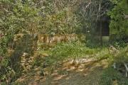 Fontaine de Lacam